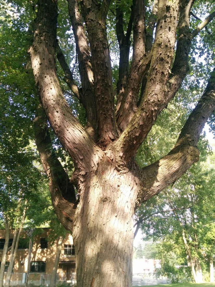 Doigts-arbre