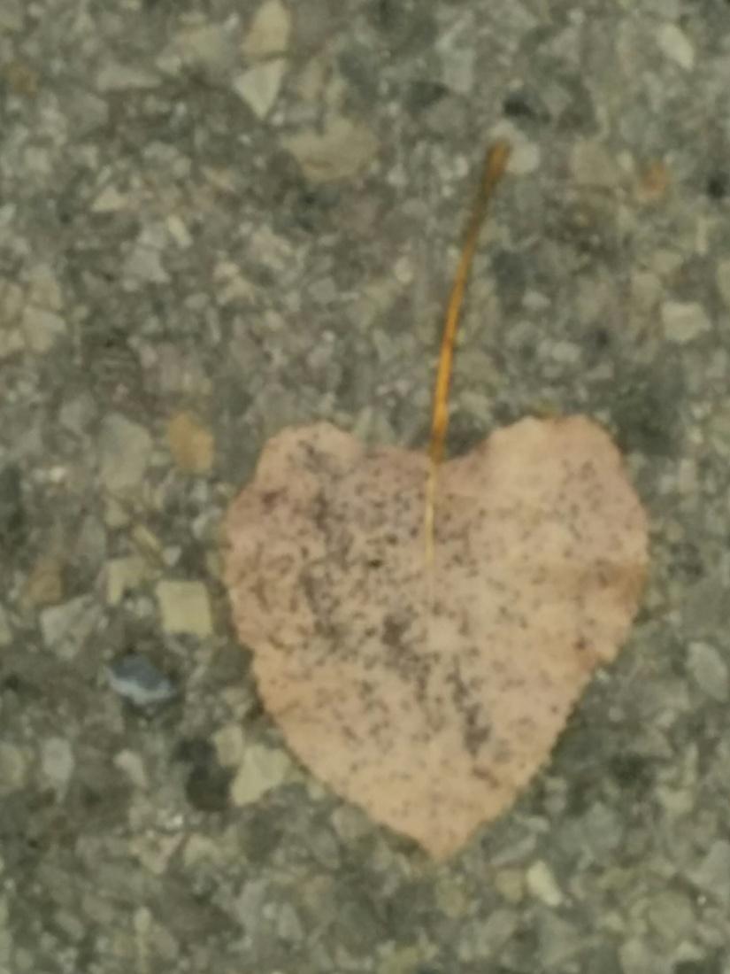 Coeur ajouré