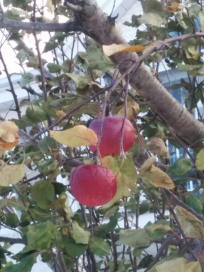 PommesrueBlouin