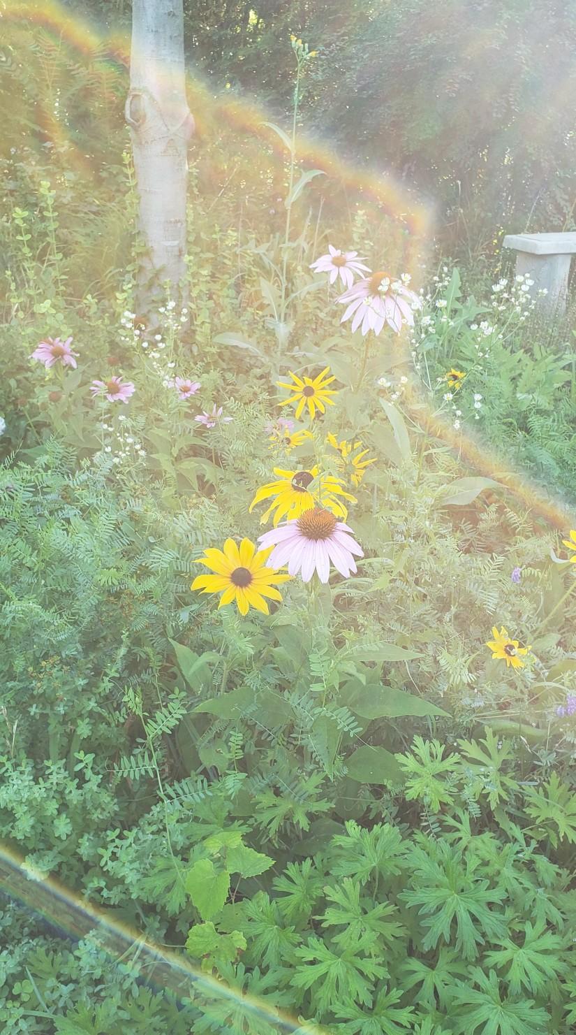 Fleurs et prisme