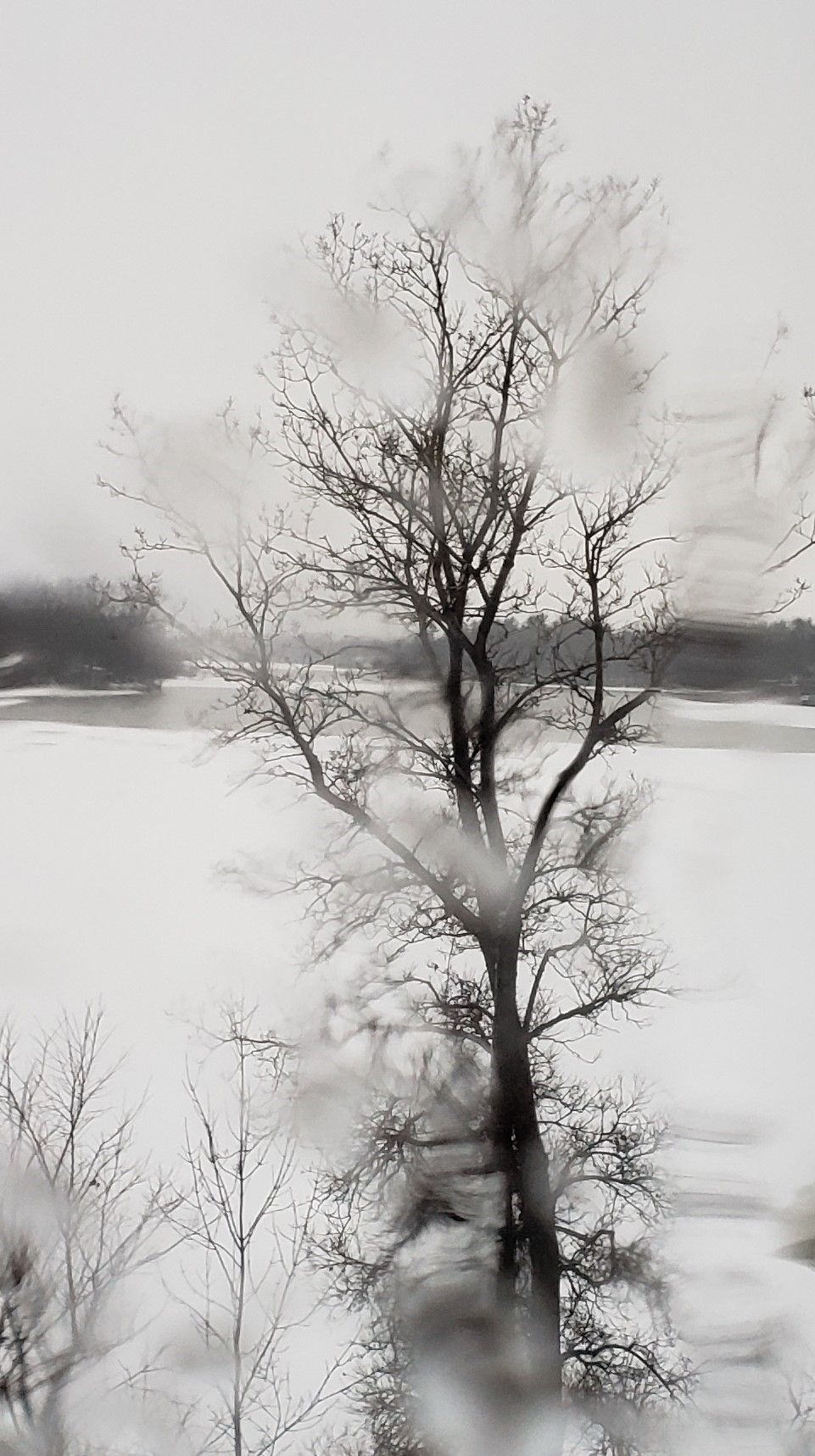 Arbre en hiver
