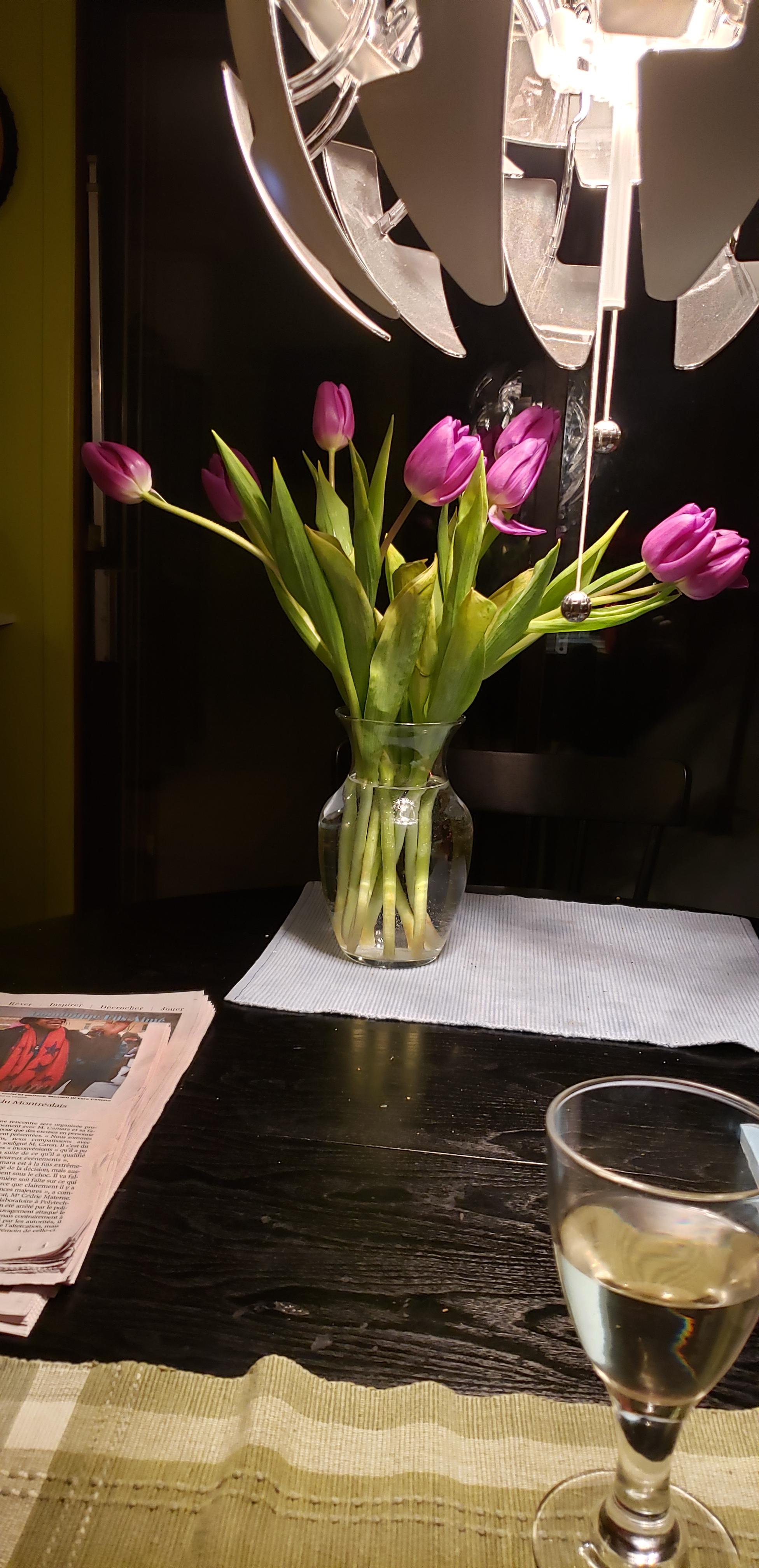 Tulipes de février